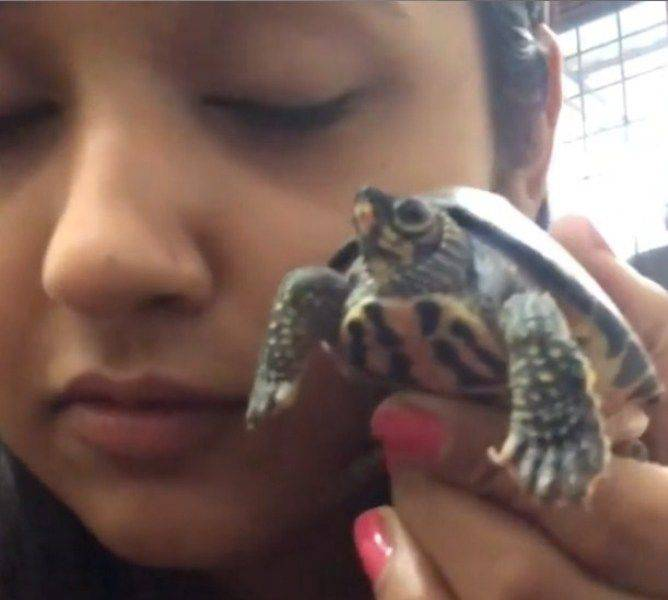 Kajal Raghwani with his pet turtle